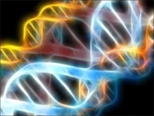 Brin d'ADN